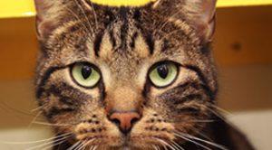 asieldieren-katten