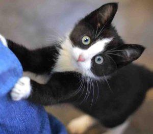 pk1 kitten2